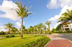 trees för kokosnötliggandemorgon Royaltyfria Bilder