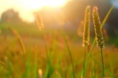 trees för morgon för äng för alfrostgräs arkivfoton