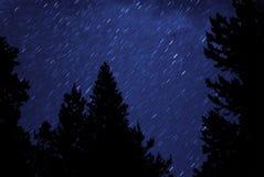 trees för nattsilhouettestjärnor Royaltyfri Foto