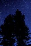 trees för nattsilhouettestjärnor Arkivbild