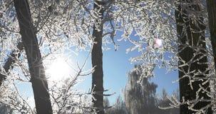 trees för park för den dagfrostjanuari naturen övervintrar snöig lager videofilmer