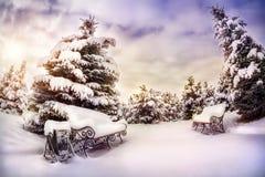 trees för park för den dagfrostjanuari naturen övervintrar snöig Fotografering för Bildbyråer