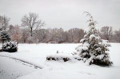 trees för park för den dagfrostjanuari naturen övervintrar snöig Arkivfoto