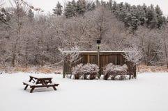 trees för park för den dagfrostjanuari naturen övervintrar snöig Arkivfoton