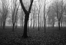 trees för park för den dagfrostjanuari naturen övervintrar snöig Royaltyfria Bilder