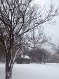 trees för park för den dagfrostjanuari naturen övervintrar snöig Royaltyfri Fotografi