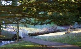 trees för park för den dagfrostjanuari naturen övervintrar snöig Arkivbild