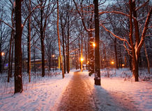trees för park för den dagfrostjanuari naturen övervintrar snöig Royaltyfri Bild