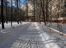 trees för park för den dagfrostjanuari naturen övervintrar snöig Arkivbilder