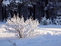 trees för park för den dagfrostjanuari naturen övervintrar snöig Royaltyfri Foto