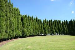 trees för rad för gräsfodrarpark arkivbild