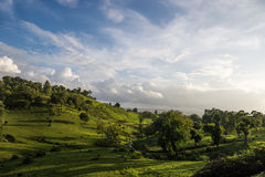 trees för silhouette för morgon för dimmahusliggande Royaltyfria Bilder