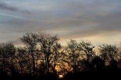 trees för silhouette för morgon för dimmahusliggande arkivbilder