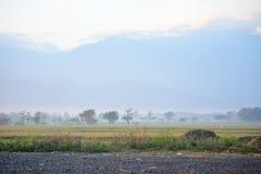 trees för silhouette för morgon för dimmahusliggande Royaltyfri Fotografi