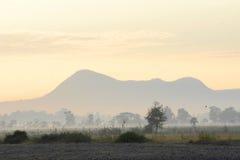 trees för silhouette för morgon för dimmahusliggande Royaltyfri Foto
