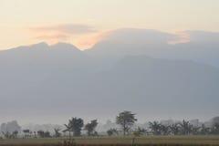 trees för silhouette för morgon för dimmahusliggande Arkivbild