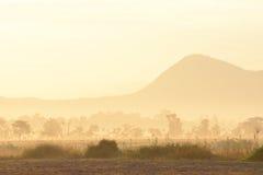 trees för silhouette för morgon för dimmahusliggande Royaltyfri Bild