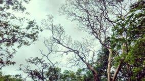 trees för sky för underkantfotopunkt Arkivfoto