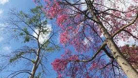 trees för sky för underkantfotopunkt Arkivbilder