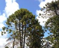 trees för sky för växter för filialoklarhetsgräsplaner Arkivfoton