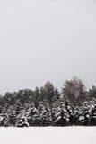 trees för text för copyspacegran dina snöig Royaltyfria Foton