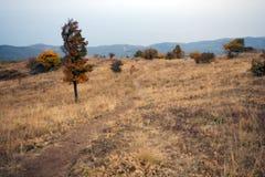 trees för väg för höstgräsberg Royaltyfri Foto
