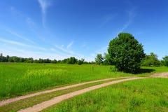 trees för väg för landsfältgreen Royaltyfria Bilder