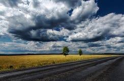 Trees för vägfältsky Fotografering för Bildbyråer