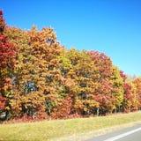 trees f?r ?ng f?r h?stbj?rkleaves orange royaltyfri bild