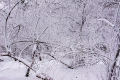 trees f?r park f?r den dagfrostjanuari naturen ?vervintrar sn?ig ulyanovsk royaltyfri bild