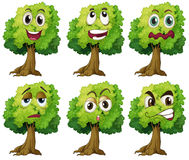 Trees with face Stock Images