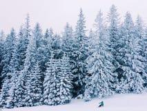 Trees. Fairytale snowy forest in Slovakia Royalty Free Stock Photos