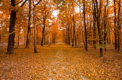 Trees during Fall Stock Photo