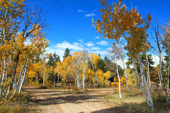 Trees in fall. Image of colorful nature in Utah Royalty Free Stock Photo