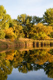 Trees in fall. Leaves on trees turning to yellow and orange Royalty Free Stock Photos