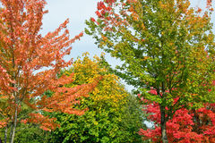 Trees in the fall Stock Photography