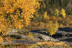 Trees at fall Stock Photography