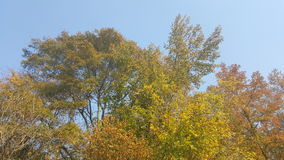 Trees. During fall Royalty Free Stock Image