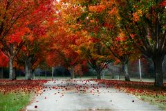 Trees Fall Autumn Color Leaves Royalty Free Stock Photos