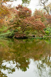 Trees in Fall Color by a Pond. Trees in fall color reflected in a pond in a Japanese garden Stock Images