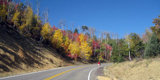 Trees in fall color, with road and hiker Royalty Free Stock Photo