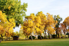 Trees in fall colors. Colorful trees in yellows and oranges Royalty Free Stock Photos