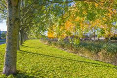 Trees in fall colors along a canal in a residential area in sunlight. In autumn royalty free stock photography