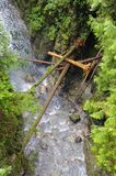 Trees fall down and become bridges of a stream Royalty Free Stock Photos