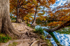 Trees with Fall Foliage along The Bank of The Frio River Stock Photos