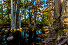 Trees with Fall Foliage on Cibolo Creek, Texas. Sun peaking through from the right side Royalty Free Stock Image