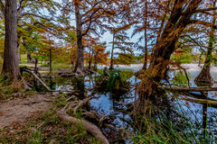 Trees with Fall Foliage Surrounding the Frio River at Garner State Park, Royalty Free Stock Image