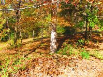 Trees with fall foliage Stock Images
