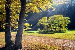 Trees at fall Royalty Free Stock Photos