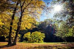 Trees at fall Stock Image